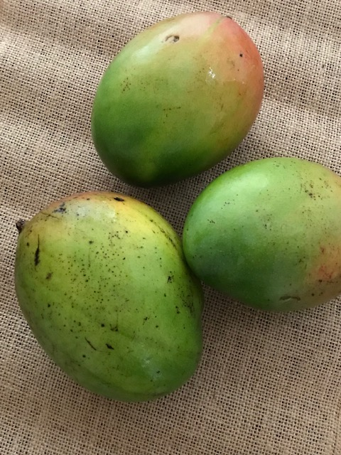 mangoes to make mango pickle or avakaya