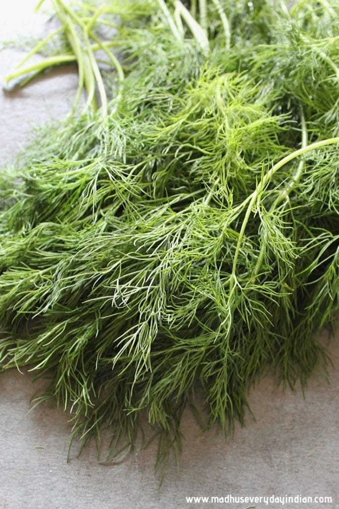picture of dill leaves